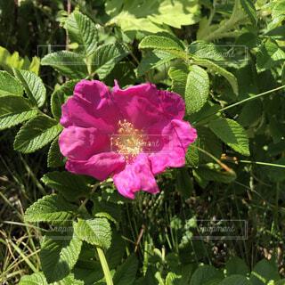 花のクローズアップの写真・画像素材[4755921]
