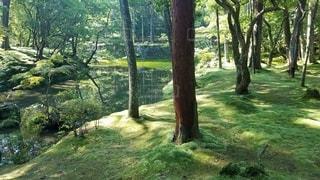 京都 西芳寺 庭園の写真・画像素材[2266744]