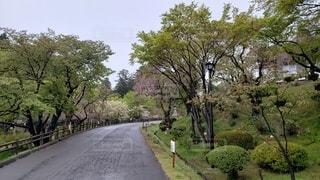塩釜 塩竈神社参道 庭園の写真・画像素材[2269601]