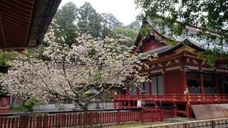 陸奥国一ノ宮 塩竈神社 桜と拝殿の写真・画像素材[2269616]