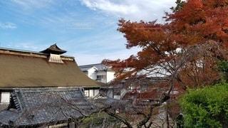 吉野 竹林院群芳園 紅葉樹と本館の写真・画像素材[2724458]