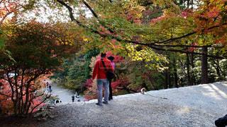 京都 高雄山神護寺 階段上からの景色の写真・画像素材[2792544]