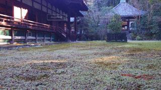 京都 青蓮院門跡 宸殿前の霜が降りた苔の写真・画像素材[2906302]