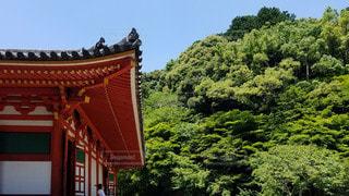 大阪 観心寺 新緑樹と金堂の写真・画像素材[2909423]