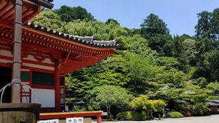 大阪 観心寺 新緑樹と金堂の写真・画像素材[2909428]