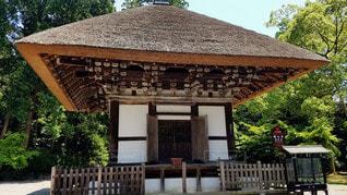 大阪 観心寺 建掛塔の写真・画像素材[2910569]