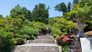 大阪 観心寺 参道の写真・画像素材[2910563]