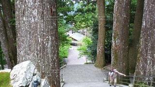 徳島 四国八十八ヶ所 第21番 太龍寺 ロープウェイ乗場からの石段の写真・画像素材[3116717]