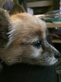 No.131893 犬