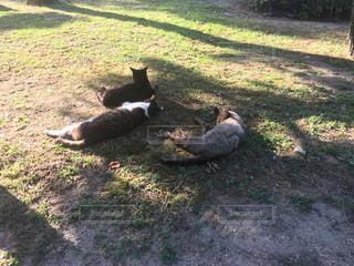 三匹猫の休憩の写真・画像素材[2248036]