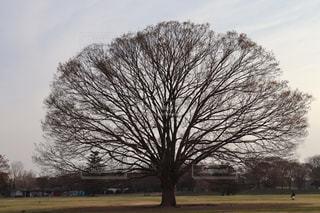 大きな木の写真・画像素材[2248855]