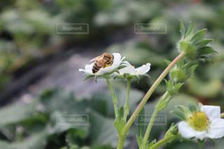 ハチの写真・画像素材[2248862]