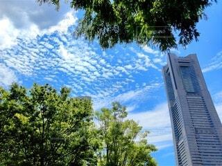 晴れた空とタワーの前の木の写真・画像素材[4664828]