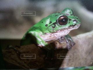 みどりのカエルがひょっこり!の写真・画像素材[2249390]