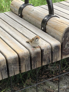 木製のベンチの上に座っている猫の写真・画像素材[2334151]