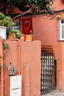 建物の脇に座っている猫の写真・画像素材[2856129]