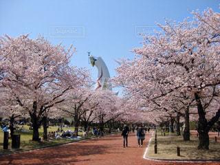 万博記念公園の桜の写真・画像素材[2876642]