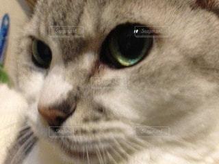 猫 - No.93129