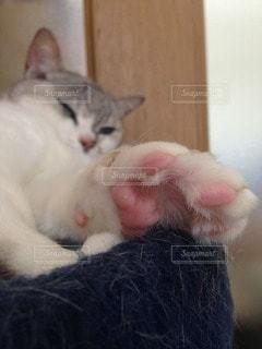 猫 - No.93200