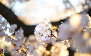 春の陽気の写真・画像素材[2253967]
