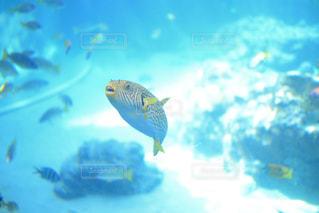 おもしろい顔した魚の写真・画像素材[2267973]