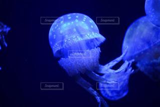 水族館のクラゲの写真・画像素材[2267974]