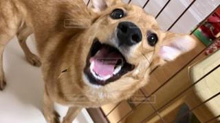 犬の写真・画像素材[2253942]
