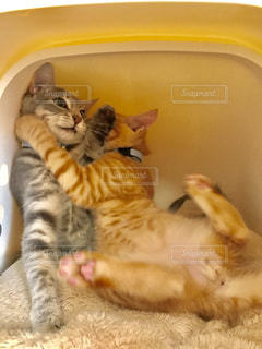 猫の写真・画像素材[2254853]