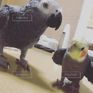 動物の写真・画像素材[2255563]