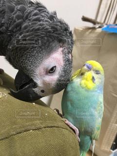 動物の写真・画像素材[2255565]