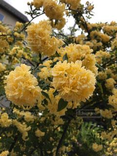 花の写真・画像素材[2256238]
