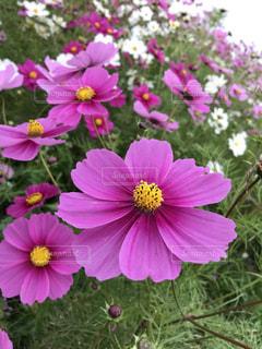 花の写真・画像素材[2257139]