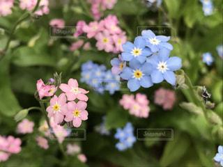 花の写真・画像素材[2257439]