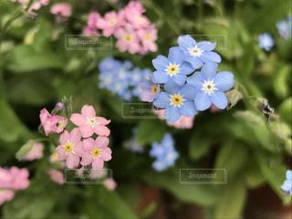 花の写真・画像素材[2257443]