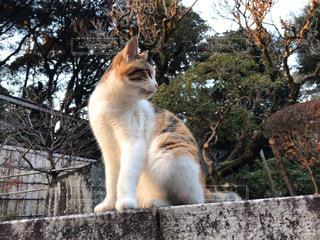 棚の上に座っている猫の写真・画像素材[2259531]
