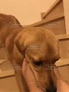カメラを見ている犬の写真・画像素材[2278769]