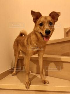カメラのポーズをとる鏡の前に座っている犬の写真・画像素材[2278771]