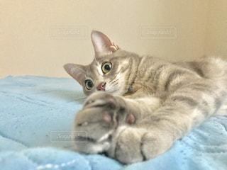 ベッドに横たわる猫の写真・画像素材[2307092]