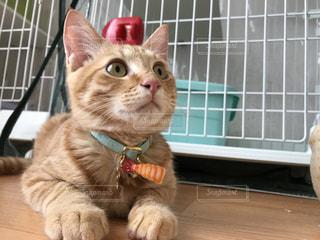窓の前に座っている猫の写真・画像素材[2309030]