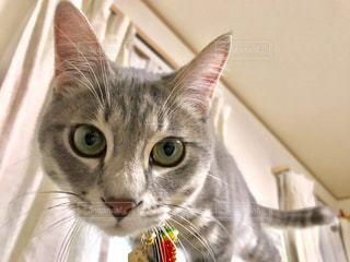 猫のクローズアップの写真・画像素材[2311272]