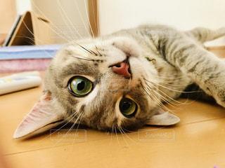 猫の写真・画像素材[2325549]
