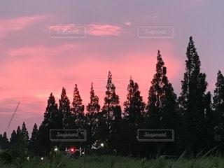 ピンクの写真・画像素材[2326702]