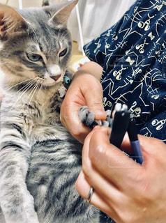 猫を抱いている人のクローズアップの写真・画像素材[2334047]