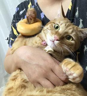 猫を抱いている人の写真・画像素材[2335561]