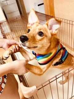 かわいい愛犬の写真・画像素材[2340500]