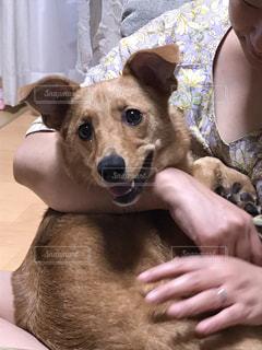 犬を抱いている人の写真・画像素材[2340507]