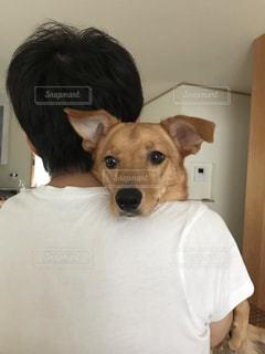 歩くのが大嫌いな抱っこが大好きな犬の写真・画像素材[2342564]