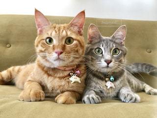 お互いの上に横たわっている猫の写真・画像素材[2352896]