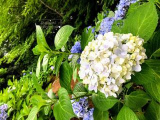 植物のクローズアップの写真・画像素材[2357971]
