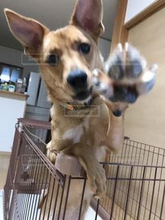 愛犬の写真・画像素材[2814665]